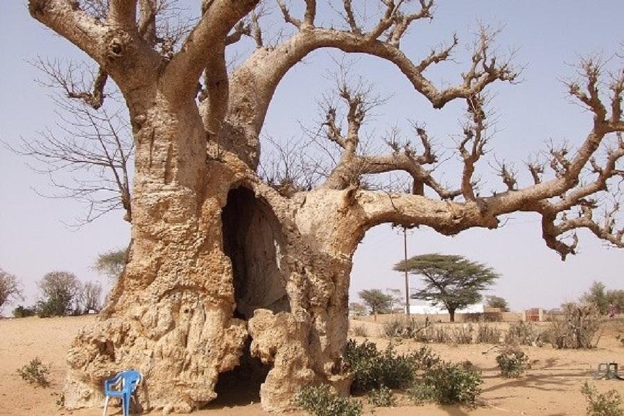 辺境のトイレ紀行|第2回セネガルで出会った人々とトイレ